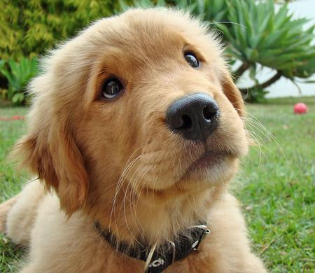 Dog S Best Friend Modesto